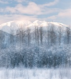 Snow-covered forest and mountains - Alaska Chilkat Bald Eagle Preserve, Haines, Alaska