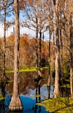 Cypress swamp along River Styx - Alachua County, Florida