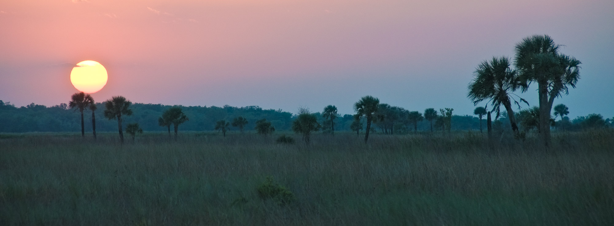 Sabal Palm sunset - Kissimmee Prairie Preserve State Park, Florida