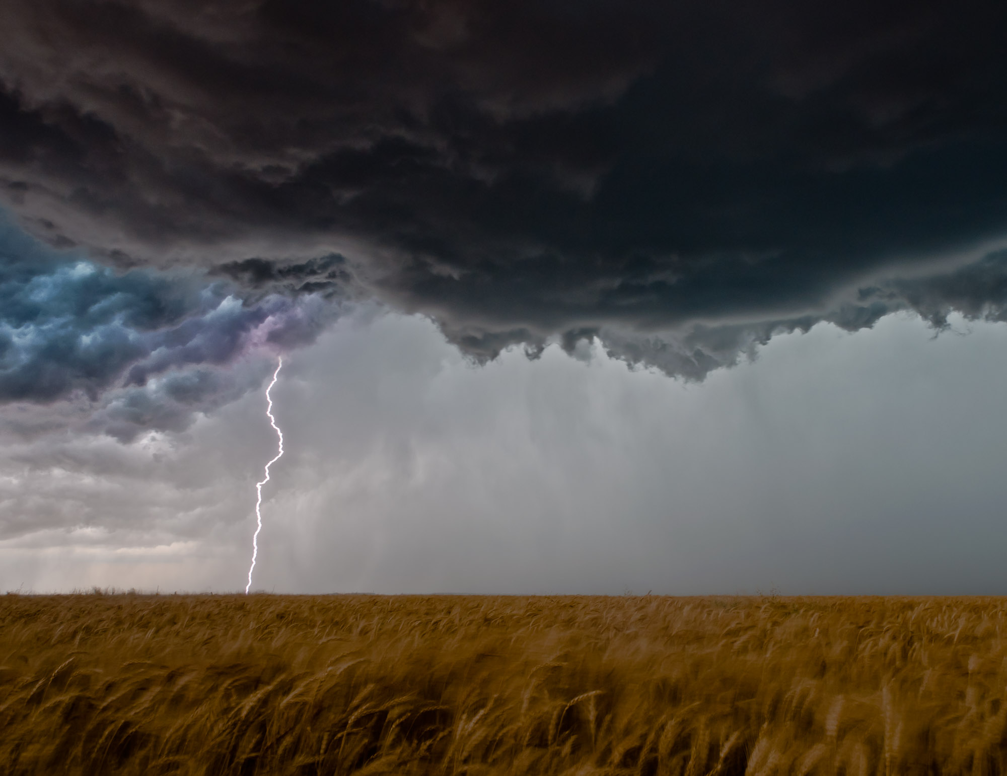 Lightning and wheat field - Elmer, Oklahoma