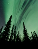 Aurora over spruce trees - Brooks Range, Alaska