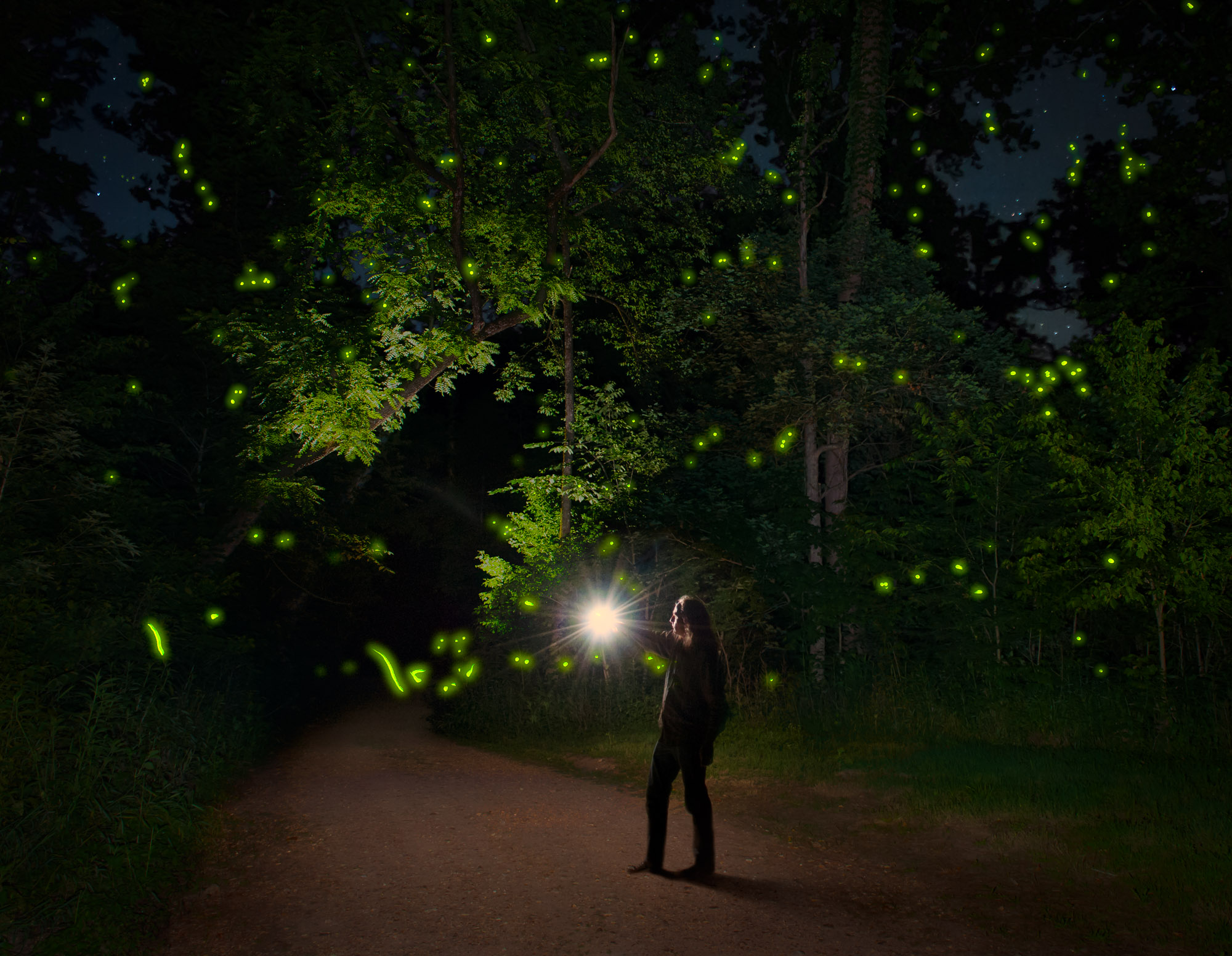 The Firefly Whisperer - Missouri Ozarks