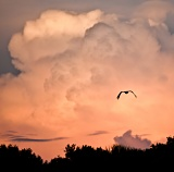 Sunset-lit clouds and silhouetted bird - Myakka River State Park, Florida
