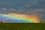Rainbow in irrigator spray - Homestead, Florida