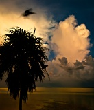Crows and storm clouds - Everglades National Park, Florida
