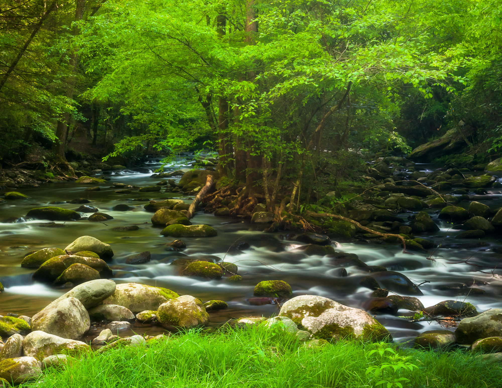 Laurel Creek - Great Smoky Mountains National Park, Tennessee