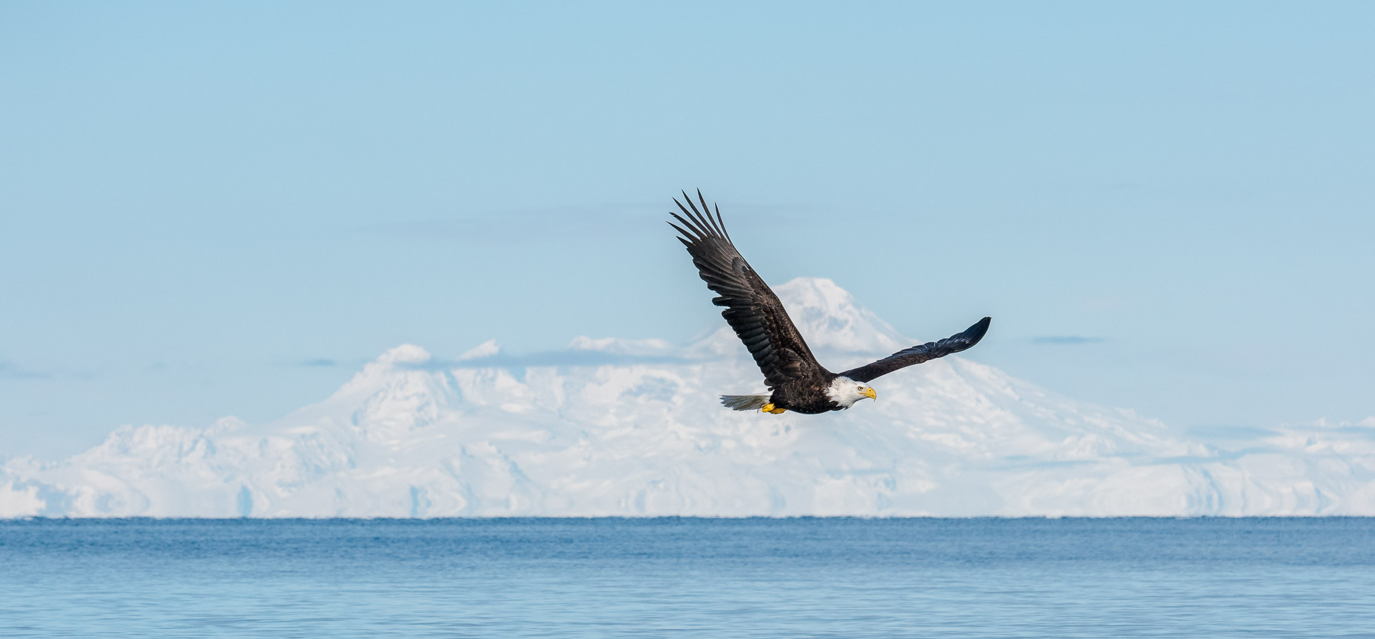 Bald Eagle and Mount Iliamna - Kachemak Bay, Alaska